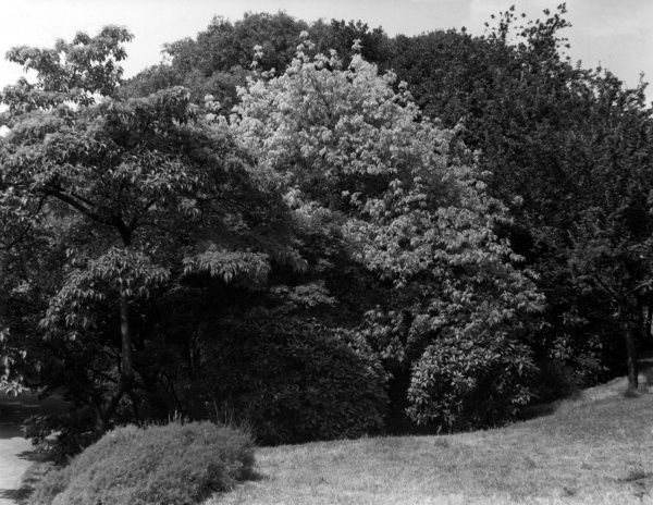 The Shrubbery, Greenwich Park, London. Date: 1950s