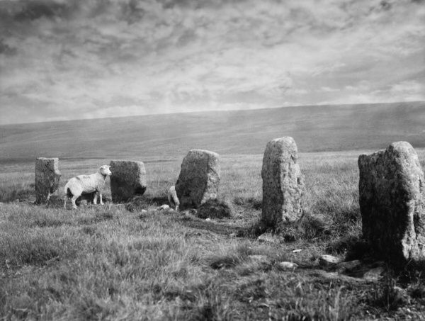 The Grey Wethers, standing stones on Dartmoor, Devon, England, survivals of Prehistoric times, in the middle of the moor. Date: BC