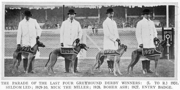 A parade of the last four Greyhound Derby winners at White City in 1932. From L to R 1931, Seldom Led; 1929-30, Mick the Miller; 1928, Boher Ash; 1927, Entry Badge. The 1932 Derby, watched by 75,000 spectators, was won by Wild Woolley