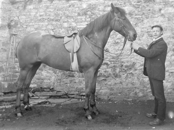 A groom with a saddled stallion in front of a stone wall, probably somewhere in Mid Wales