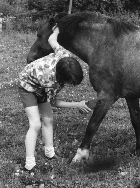 A boy grooming a pony. Date: 1960s