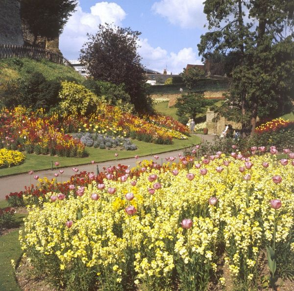 A glorious array of flowers in bloom in the Castle Gardens, Guildford, Surrey, England. Date: 1960s