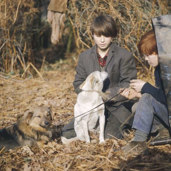 Two young gypsy boys sit with their pet dogs at an encampment in Surrey