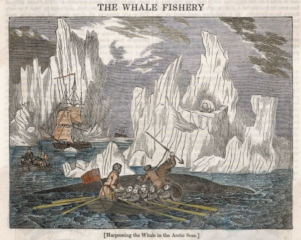 Harpooning whales in the Arctic