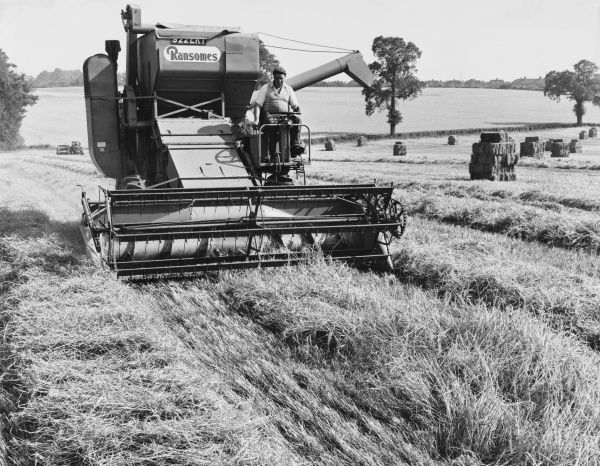 Harvesting barley with a Ransome Combine Harvester on a farm in Suffolk, England