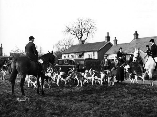 The are few sights so picturesque in the countryside as the Meet of the foxhounds and these early arrivals make a colourful scene on a village green, Hertfordshire, England. Date: 1950s