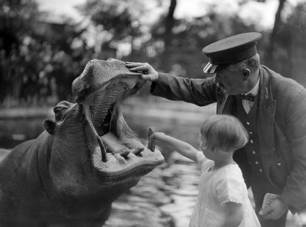 A little girl helps the zoo keeper to give a hippopotamus a dental check! Date: early 1930s