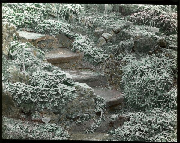Hoar frost on plants growing either side of some steps in an unidentified garden