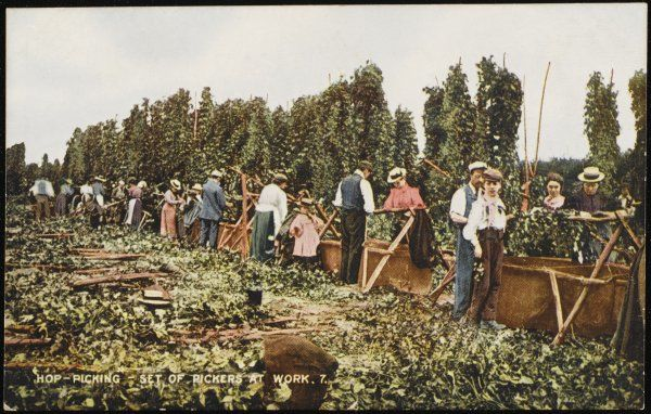 A set of hop pickers at work