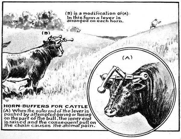 Illustration showing an invention, patented in 1921, designed to give any bull, using his horns in an aggressive fashion, a bash on the nose