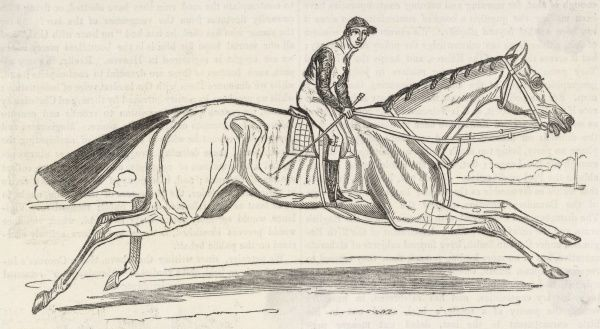 The champion racehorse Beeswing (1833 - 1854) whose most notable victory was the Ascot Gold Cup in 1842