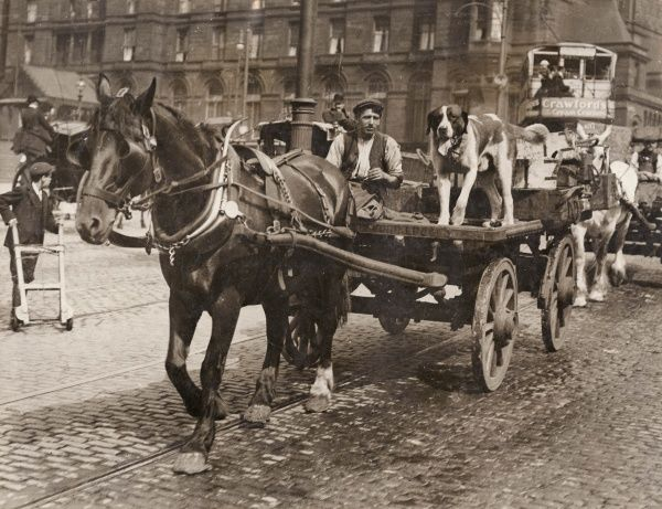 A driver who did not need police protection -- a man with his horse and cart, and a dog for good measure. The Liverpool transport strike began with two of the seamen's unions, resulting from a range of grievances, and spread to other transport workers