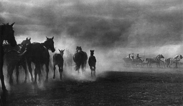 Horses panicking during a storm in the Hortobagyar Puszta, Hungary. Date: 1930s