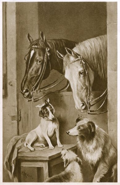 Portrait of Two Horses peering over the edge of their stall to check on a group of three dogs, including a terrier with a bandaged head. Date: circa 1910s