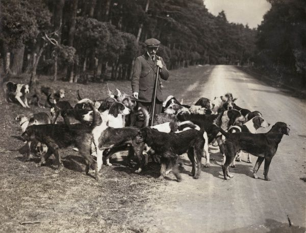 The hounds of the Essex Otter Hunt, with their Master, at the side of a country road
