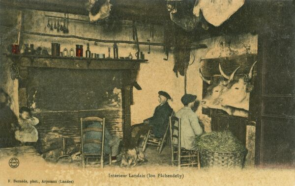 The interior of a house in Landes a departement in south western France, where the livestock can join in the evening's discussion round the fire and tuck into the large basket of grass! A remarkable card