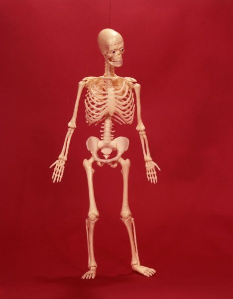 A human skeleton on a garish red background! Date: 1967