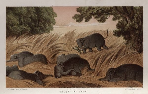 Caught at Last -- a hunter being trampled by an elephant in Ceylon (Sri Lanka).  1854