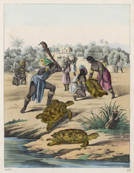 Hunting turtles in Africa : they are hunted not only for food but also for their shells which can be used to make both useful and ornamental items