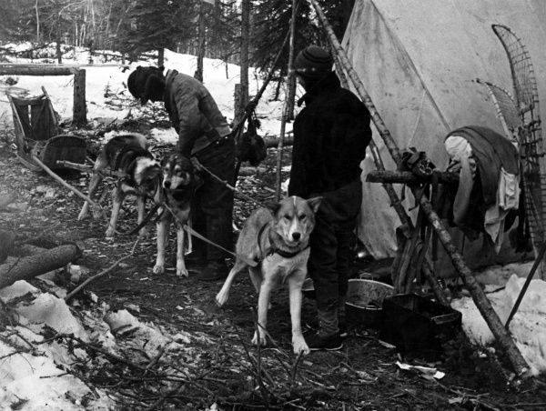 A team of huskies being harnessed to a sleigh. Date: 1930s