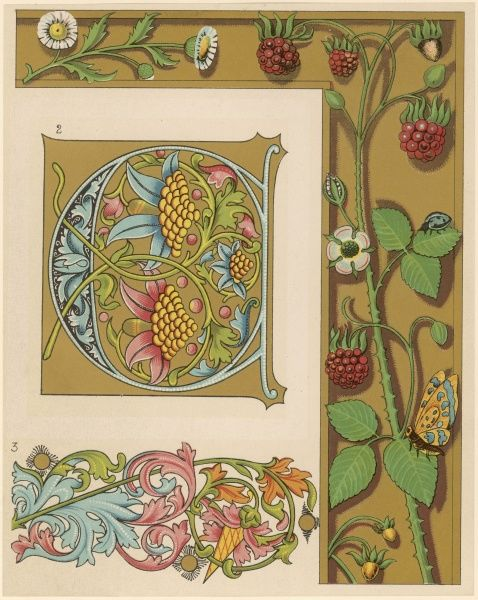 Examples of fifteenth and sixteenth century illuminating. Ornaments and large initials, ornamented with raspberries, daisies, and a butterfly