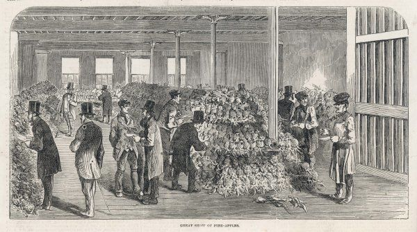 A great display of newly imported pineapples in a London warehouse - they are still a rarity in Britain
