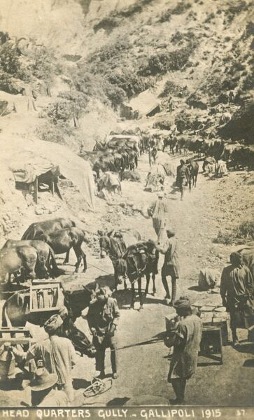 Indian (Commonwealth) troops at Gallipoli during the Dardanelles Campaign of 1915 - Headquarters Gully