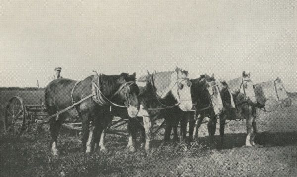A former inmate of the Ministry of Labour Instructional Centre at Claydon in Suffolk with a plough and team of horses in Canada