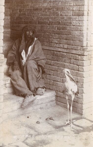 A truly superb photographic postcard of an Iraqi man sat at the base of a set of steps watching a stork (his pet?) in Baghdad, Iraq Date: circa 1910s