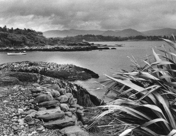 By the shores of Kenmare Bay, at Parkinsilla, County Kerry, Ireland. This is a delightful area on the west coast, with its tropical vegetation and distant Glengarrif Peninsula. Date: 1950s