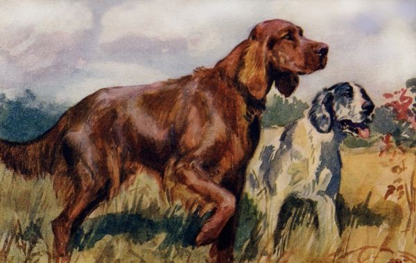Irish & English Setters. Artist: Eileen Hood. Watercolour of dogs walking in the countryside Date: circa 1922