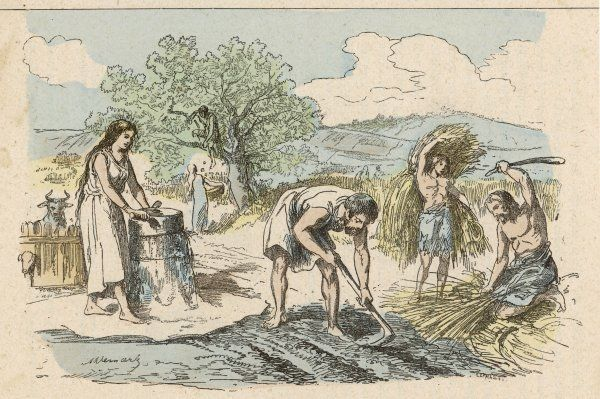 Iron age farming activities