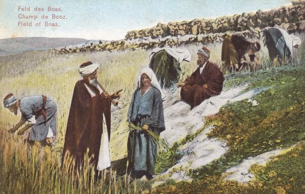Reconstruction of a Biblical scene (from the Book of Ruth) in a real Israeli field