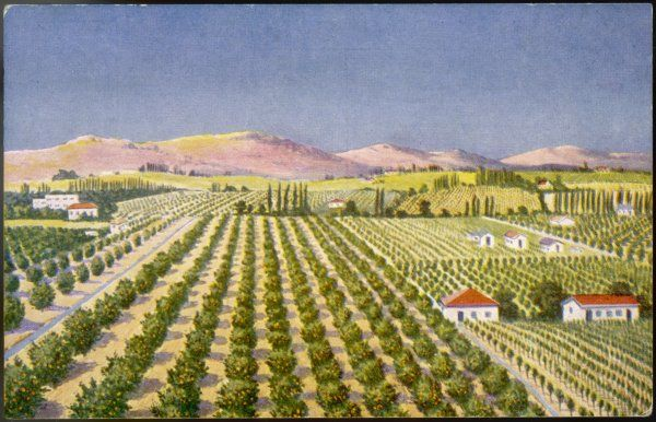 Israeli Orange grove, Palestine. Date: 1930s