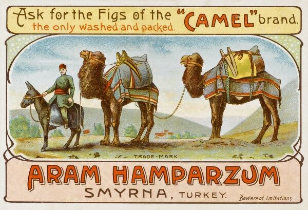 Camel brand Figs from Izmir (Smyrna), Turkey. An advertising card featuring two laden camels from a camel train led by a driver riding a mule Date: circa 1901