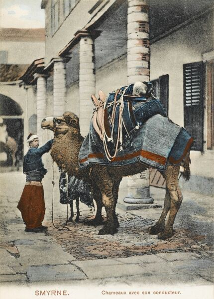 A very handsome, heavily-laden camel with his driver, prepare to leave from Izmir (Smyrna), Turkey
