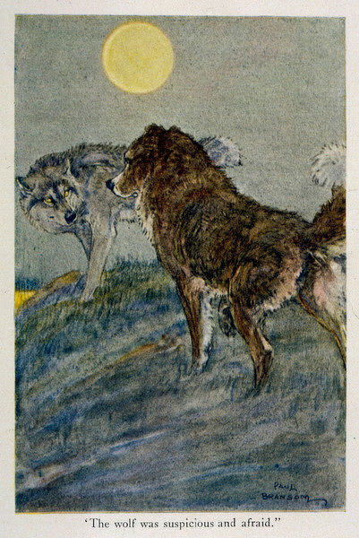 Buck's encounter with a frightened wolf