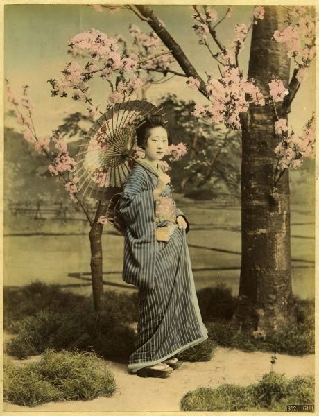 A Japanese lady in traditional costume holds a parasol and stands under a cherry blossom tree