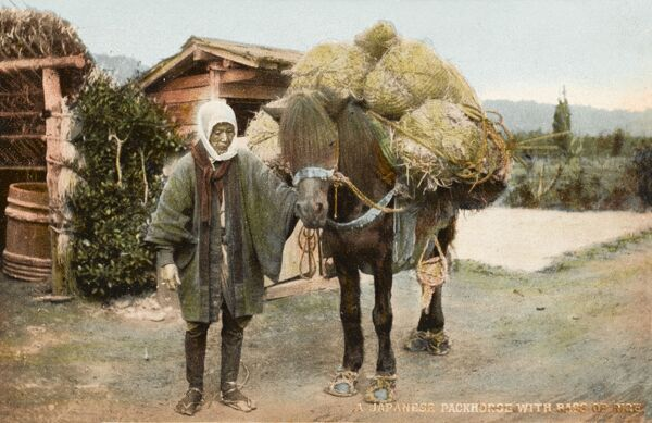 Japanese packhorse with bags of rice