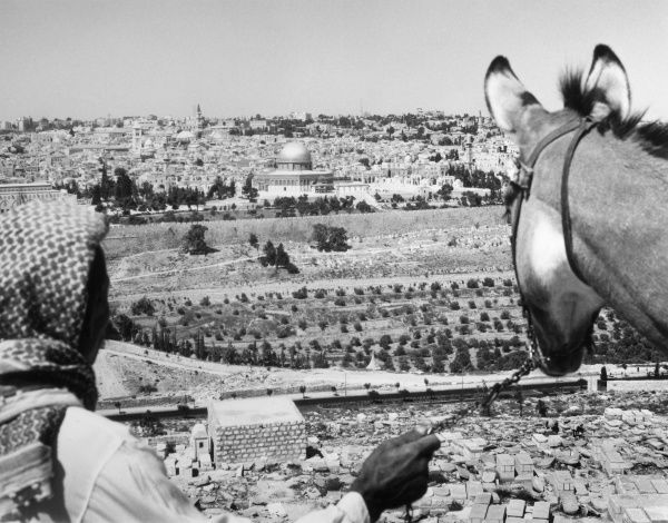 An Arab traveller and his donkey pause to take in the fine view of Jerusalem, Israel. Date: late 1960s