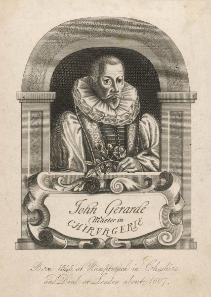 JOHN GERARD herbalist, surgeon and botanist : his Herbal is the first great English herb- books. (We have many woodcuts from it in our files)