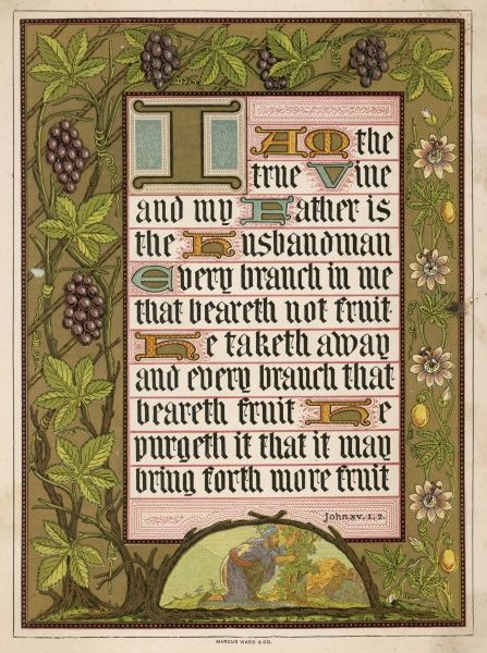 JOHN XV: 1,2 'I am the true vine and my father is the husbandman...' Text decorated with grape vine and grapes & fruiting and flowering passion flower vine