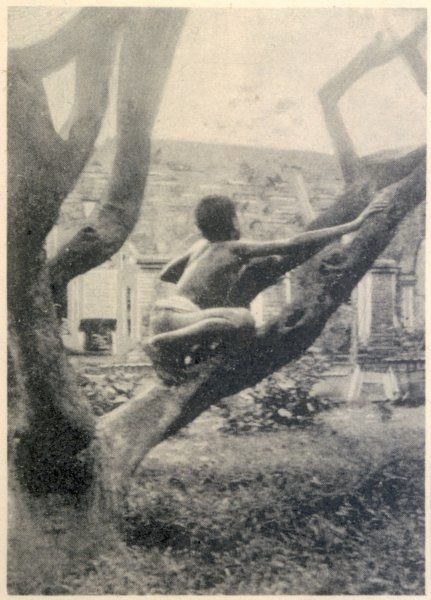 MIDNAPORE, INDIA Kamala, two years after living with wolves 1912-1920, climbs a mango-tree