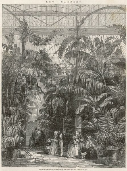 An engraving of the interior of the Palm House at Kew Gardens in 1852. Built by the Irish engineer, Richard Turner and architect, Decimus Burton between 1844-1848, the glasshouse was an extraordinary feat of engineering and remains today an iconic building