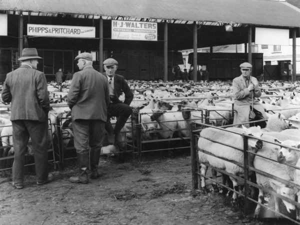 Farmers chatting around sheep pens at the Kidderminster Sheep Fair, Worcestershire, England, where over 6,000 sheep a year changed hands