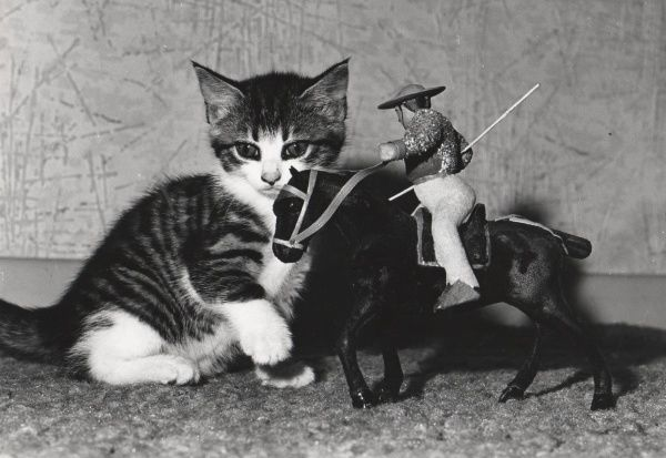 A sweet little kitten sits next to a model of a horse and rider, based on the caballero who takes part in bullfights in Spain