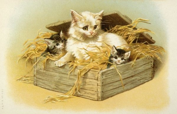 A white mother cat sits with her black and white kittens in a box of straw