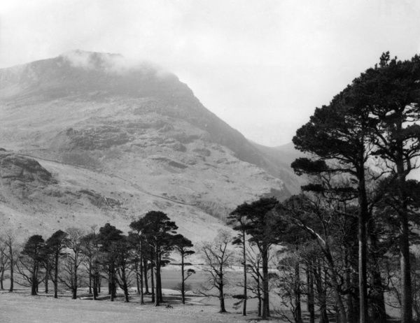 Pine trees beside the lovely Lake Buttermere, Cumbria, England, with the towering mass of High Stile in the background. Date: 1930s