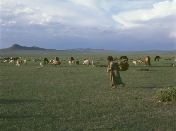 Landscape at Burd, Mongolia, with domestic animals