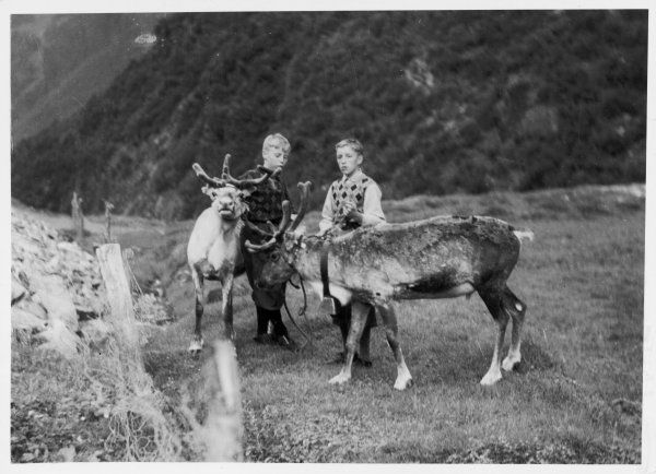 Two boys with their reindeer, Lapland